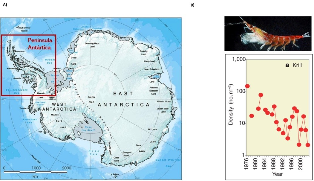 mapa-antartida-grafico-krill