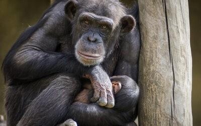 La inteligencia de los animales